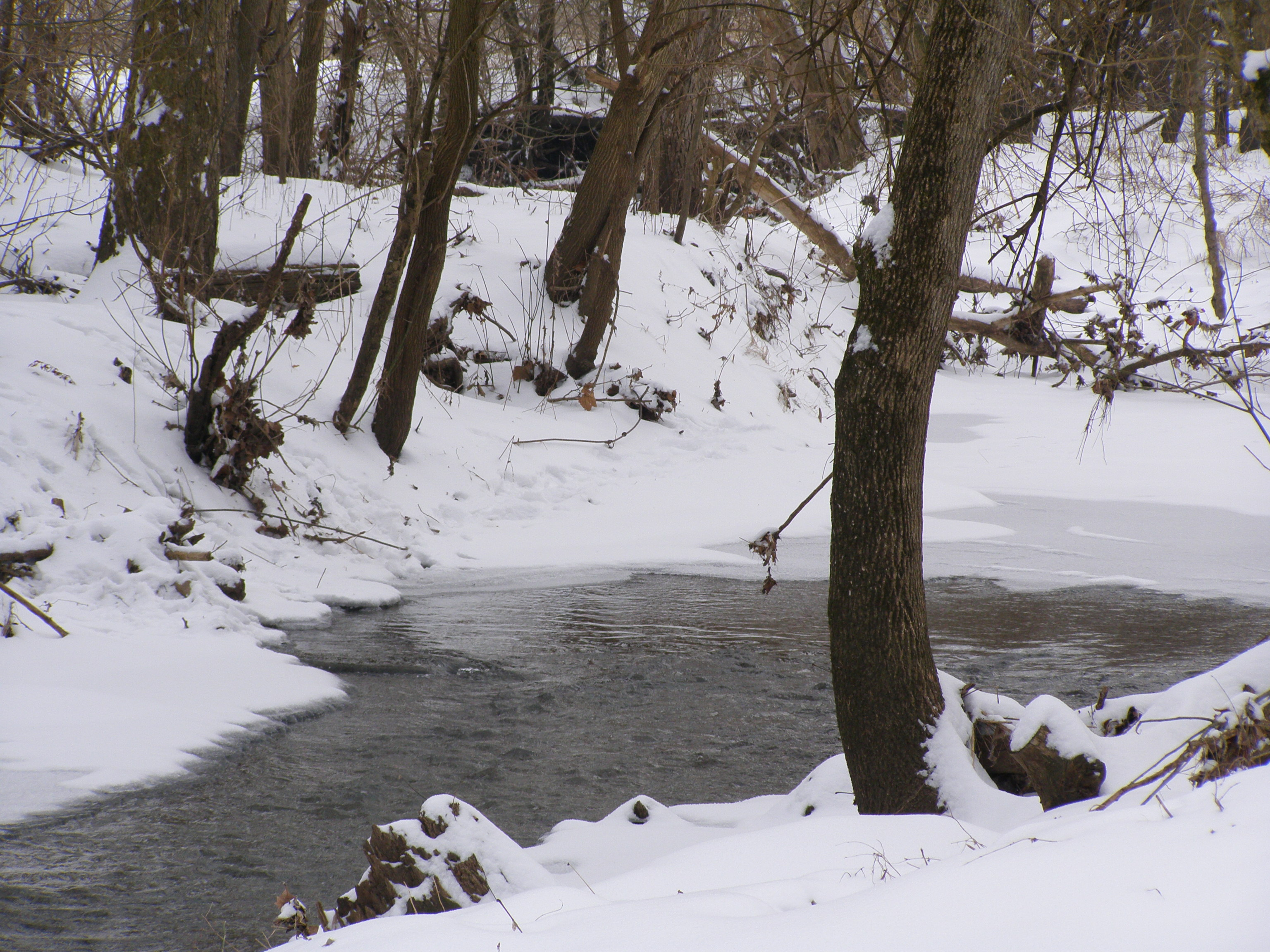 Winter at Rock Springs Conservation Area